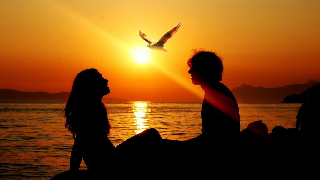 Couple sunset sea birds silhouettes