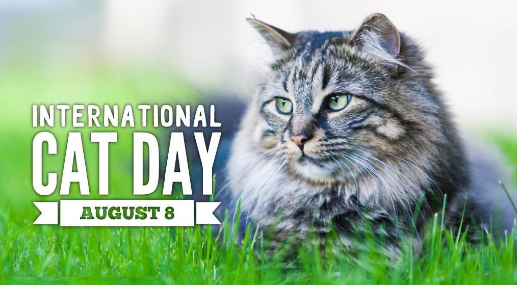 Happy International Cat Day, 2019!