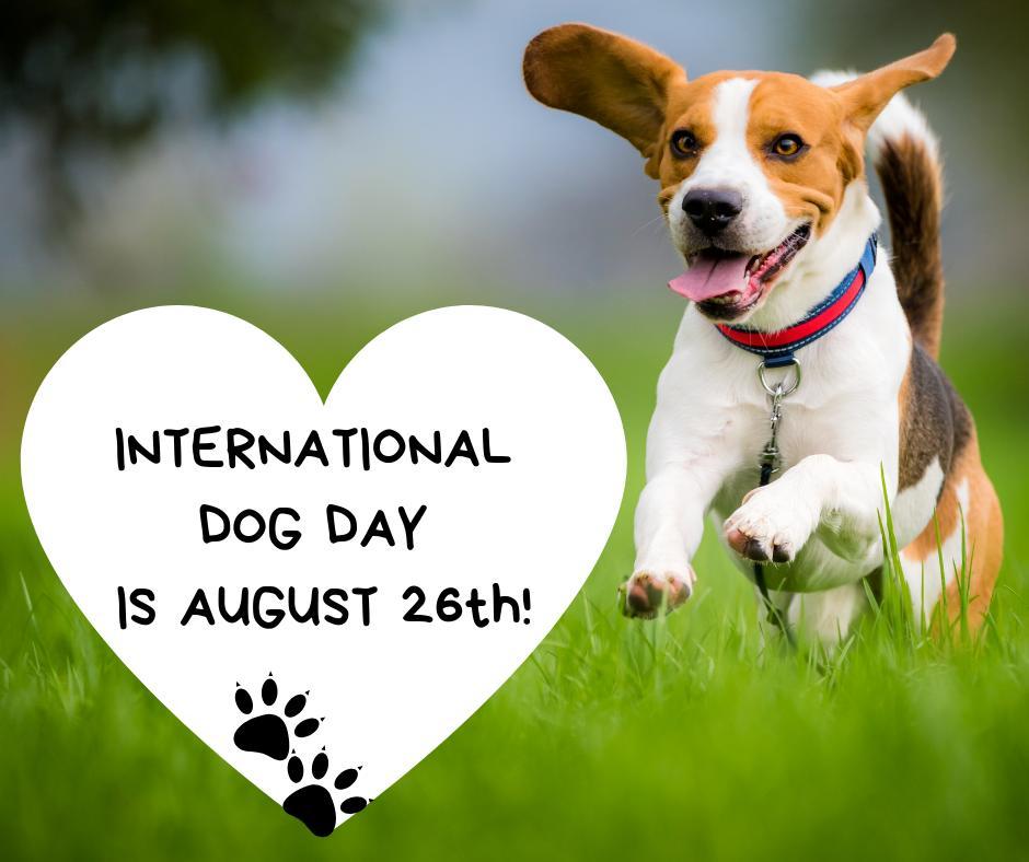 Happy International Dog Day, 2019!