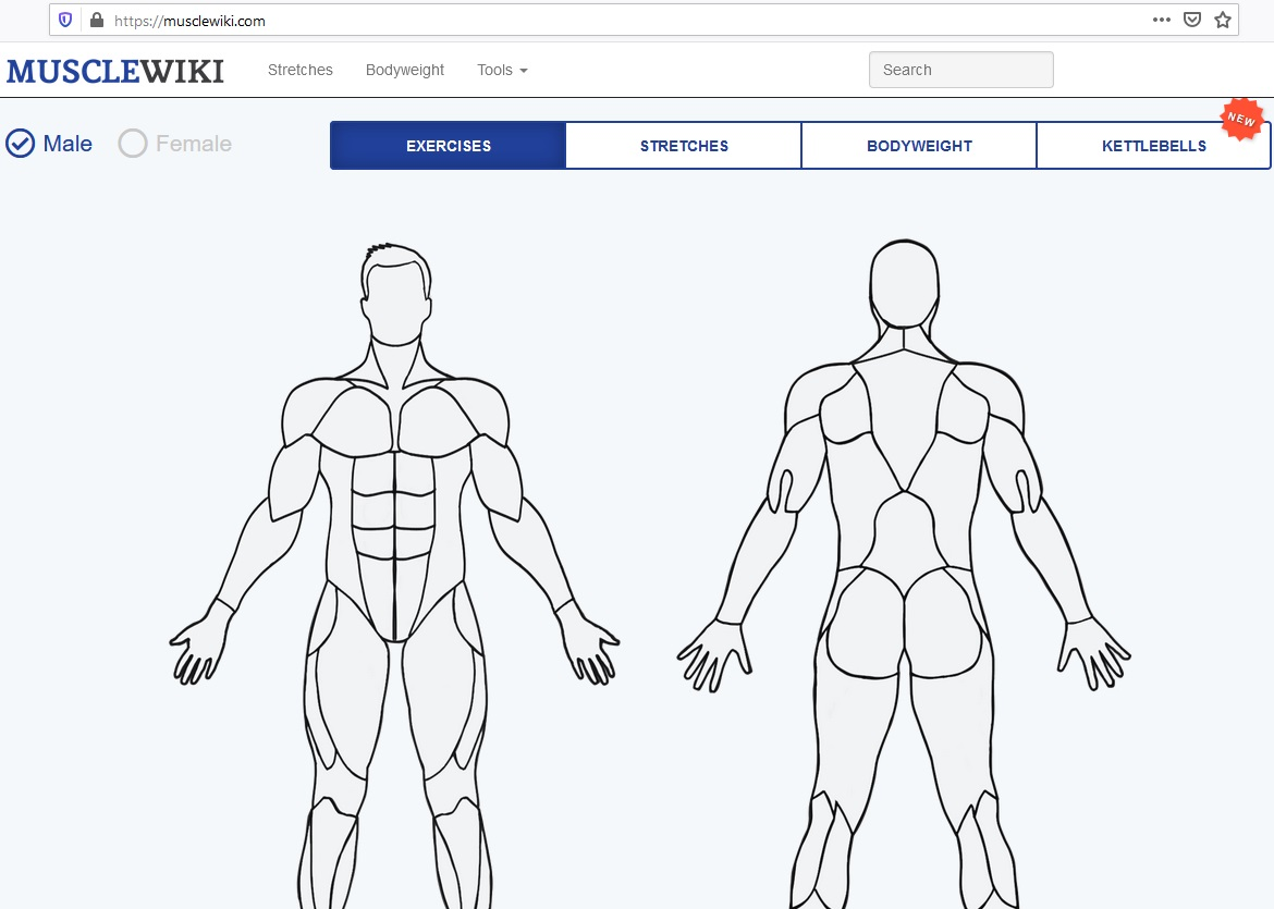MuscleWiki – a cool site for getting in shape